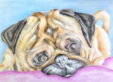 Pencil color work by Dinisha